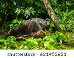 giant anteater | Shutterstock . vector #621452621