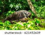 giant anteater | Shutterstock . vector #621452639