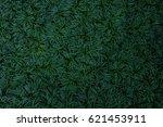 dark green leaves of ground... | Shutterstock . vector #621453911