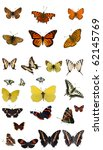 Stock photo butterfly collection 62145769