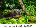 giant anteater | Shutterstock . vector #621462065
