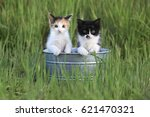 Stock photo adorable kittens outdoors in tall green grass in a tin bin 621470321