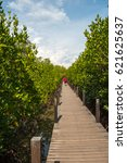 mangrove forest   Shutterstock . vector #621625637