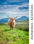 furry highland cow in isle of... | Shutterstock . vector #621654161