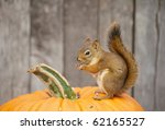 A Mother Squirrel Perched On A...