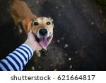 Stock photo dog friend of the owner 621664817