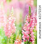 Beautiful Pink Flowers At...