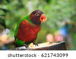 closeup of a single parrot ... | Shutterstock . vector #621743099