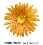 Orange Gerbera Flower On White...