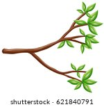 Single Branch With Green Leave...
