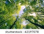 opening between branches | Shutterstock . vector #62197078