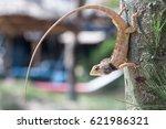Leguan Climbing A Palm Tree