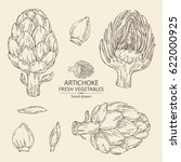 collection of artichoke. hand... | Shutterstock .eps vector #622000925