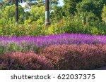 colorful flowering plants in... | Shutterstock . vector #622037375