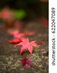 japanese maple leaf | Shutterstock . vector #622047089
