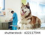 Stock photo fluffy buddy of humans visiting vet 622117544