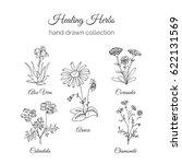 herbs illustration. handdrawn... | Shutterstock . vector #622131569