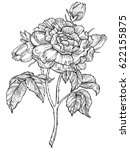 rose flower engraving vector
