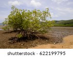 Mangrove Tree  Mangrove Forest...