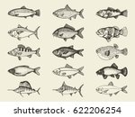 fish river and marine vintage... | Shutterstock .eps vector #622206254