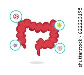 large intestine vector... | Shutterstock .eps vector #622223195