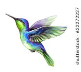 Watercolor Illustration  Flyin...
