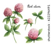 hand drawn watercolor botanical ... | Shutterstock . vector #622296491