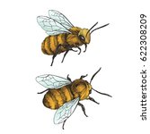set of bees. vector hand drawn... | Shutterstock .eps vector #622308209