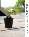 green cactus in pot with white... | Shutterstock . vector #622312139