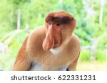 Proboscis Monkey Or Nasalis...