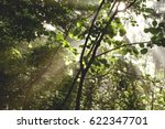 Sun Shines Through The Forest...