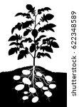 editable vector silhouette of a ... | Shutterstock .eps vector #622348589