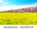 canolaflower and cherry blossom ... | Shutterstock . vector #622356719