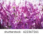 beautiful spring season flower  ... | Shutterstock . vector #622367261