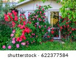 Stock photo beautiful red blooming rose flower bush in home garden at countryside at summer decorations and 622377584