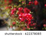 beautiful red flower in spring | Shutterstock . vector #622378085