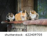 Small photo of cute street cats with funny faces lie group at the barn