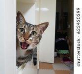 A Brown Striped Fur Cat Meows