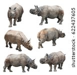 indian rhinoceros or greater... | Shutterstock . vector #622437605