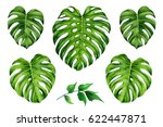 set of tropical leaves. green... | Shutterstock . vector #622447871