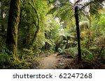 walking trail in new zealand... | Shutterstock . vector #62247268