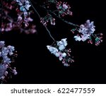 Cherry Blossoms Blooming At...