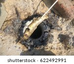 smoked fish in stick | Shutterstock . vector #622492991