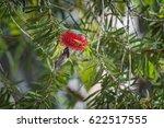 Small photo of Beautiful bird, Black-throated Sunbird (Aethopyga saturata) Malaysia