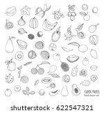 exotic tropical fruits hand... | Shutterstock .eps vector #622547321