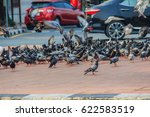 Crowd Of Pigeon On The Walking...