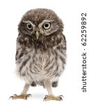 Stock photo young owl standing in front of white background 62259892