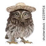 Stock photo young owl wearing a hat in front of white background 62259916