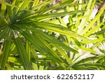 palm frond macro of saw... | Shutterstock . vector #622652117