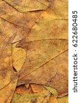 autumn dry maple leaves... | Shutterstock . vector #622680485